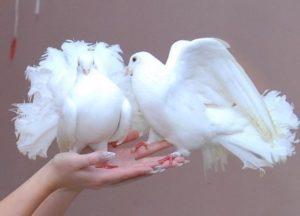 Номер, в котором выступают голуби