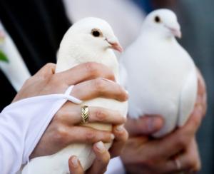 Дрессированные голуби